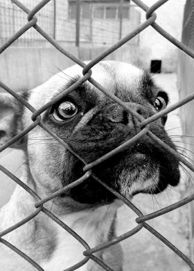 dogs behind bars #2