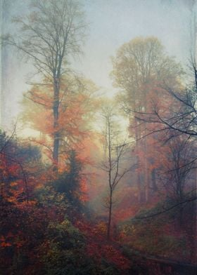 last colors - beech trees on a nisty november morning t ...