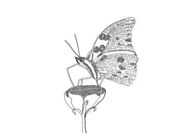 Butterfly, One Liner