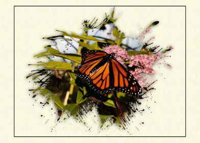 Butterfly Splat