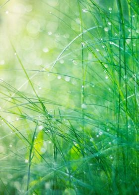 Close-up of morning dew covered grass leafs in sun ligh ...
