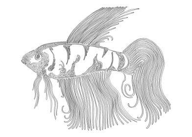 Beta Fish, One Liner.