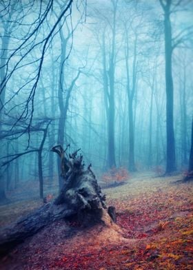 Silent Sadness - roots of a fallen tree on a misty fall ...