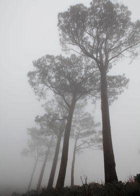 Majestic mist
