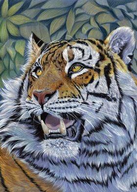 Tiger CC0807