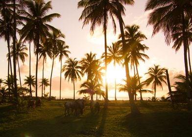 Bahian sunrise