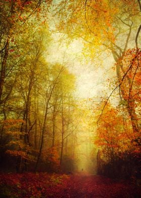 Colorful forest in fall