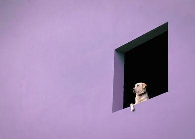 captivity (lilac)