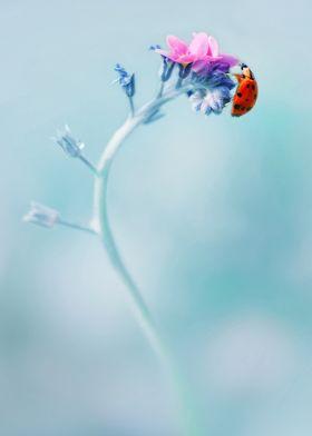 Impression with ladybug