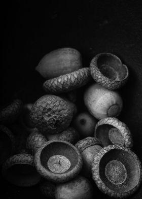 Still life of acorns from an oak tree by fine art photo ...