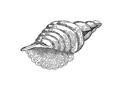 Seashell. One line drawing. The line starts in the cen ...