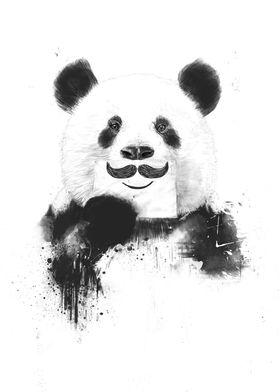Funny panda