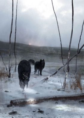 Black wolf king
