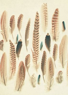 Found Feathers. Still life photography by Cassia Beck.