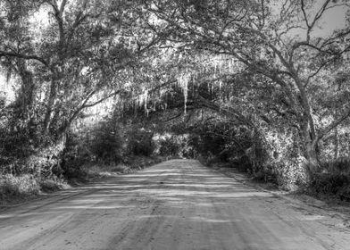 shady road