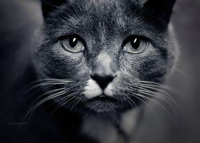 Les Yeux du Chats. ©Valerie Rosen.