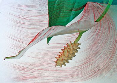Lily.  The stamen and petal of a Peace Lily illustrated ...