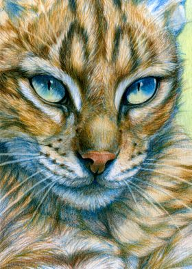 Blue-eyes Cat CC13-008