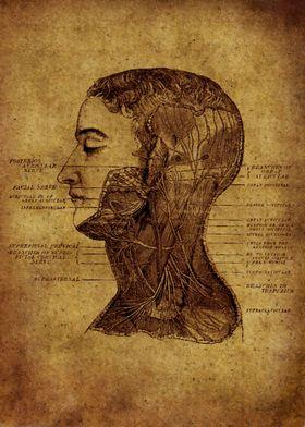 Anatomic 1