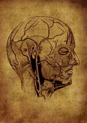 Anatomic 3