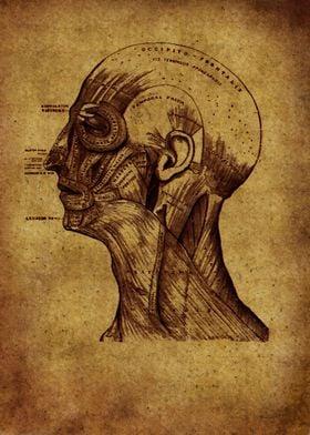 Anatomic 5