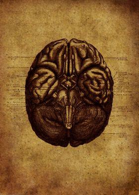 Anatomic 7