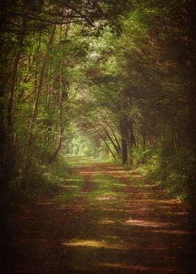 Forest Dreamland
