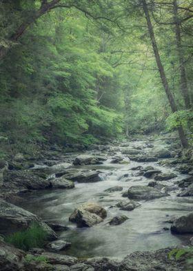 Misty Forest Stream