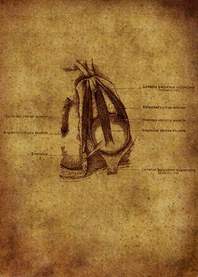 Anatomic15