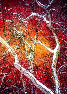 Red Winter Night