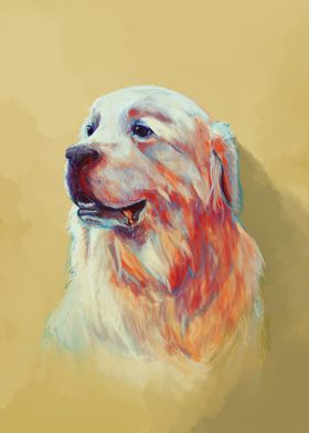 Bubba the great pyrenees
