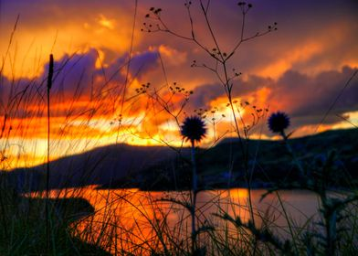 Weeds Witness to Wondrous Weather