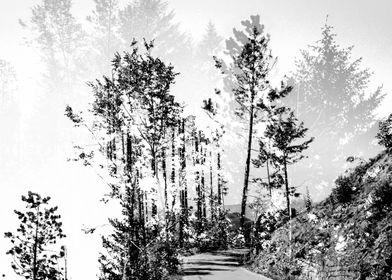 Woodland - Double Exposure Photography