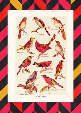 Song Birds 2