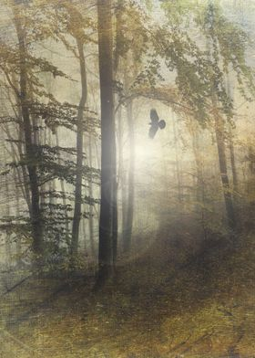 tale from the past - moody forest scenery