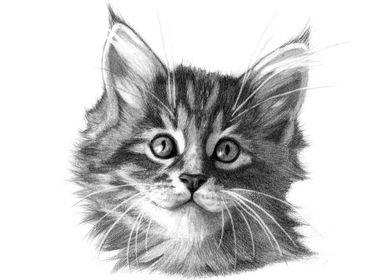 Maine coon kitten portrait by Svetlana Ledneva-Schukin ...