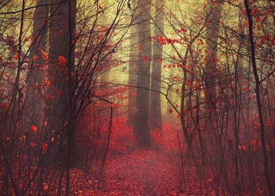 Atmospheric forest scenery on a misty morning - texturi ...