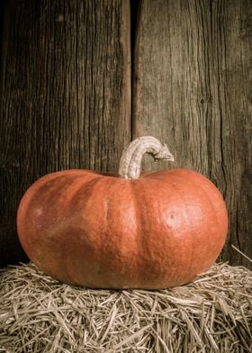 Beautiful orange pumpkin by Edward M. Fielding