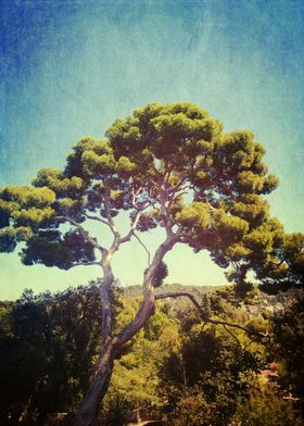 a tree above all