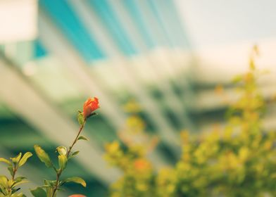 'Urban Flower' A solitary flower in a urban landscape. ...