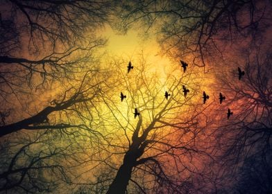 invasion - silhouette of trees and birds against a dram ...