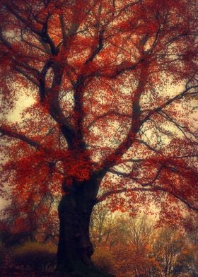 Beech tree with fall leaves