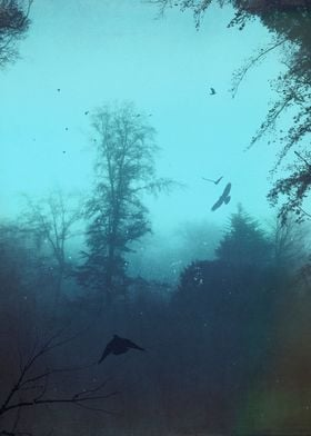 moody blues - forest on a misty morning with birds