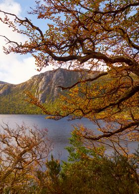 Dove lake near the ballroom forest, Cradle Mountain Nat ...
