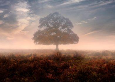 New Forest, Bratley, Hampshire, England, United Kingdom ...