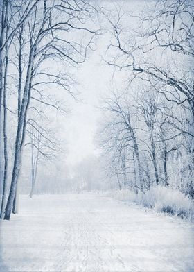 Quiet Winter Path