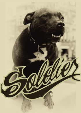 SoldierBull