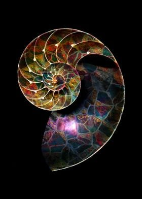 Fossils Mosaic - The Nautilus