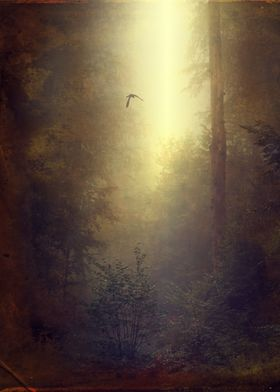 Moody forest scenery