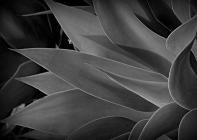 Dark and bold black and white abstract image of a Argav ...